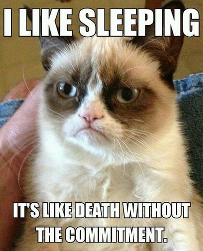Grumpy Cat likes sleeping