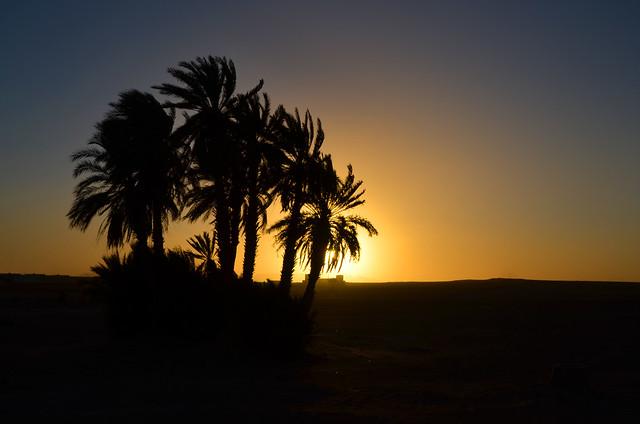 Oasis del desierto