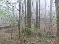 Woods - Photo of Fenioux
