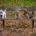 Latte, Java and Mocha relax at the park and take in the changing colour of the leaves - Sunnybrook Park by Phil Marion (57 million views - thank you all)