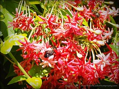 2016-11-02_PB020128_Botanical Gardens,Largo,Fl