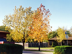 Fall Colors, North Richland Hills