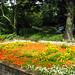 Krider Gardens Week 7