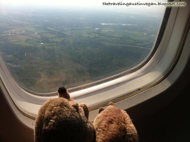 Hedgehogs on a Plane