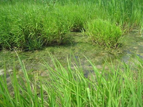 Van Wert (OH) United States  city photos gallery : primarysuccession streamrestoration ecologicalsuccession ...