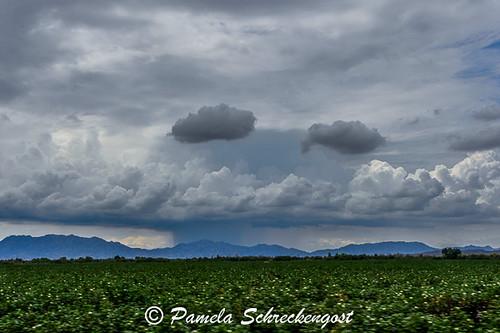 arizona clouds stormclouds cottonfarm pamelaschreckengost pamschreckcom traveling55 ©2013pamelaschreckengost weltonarizona