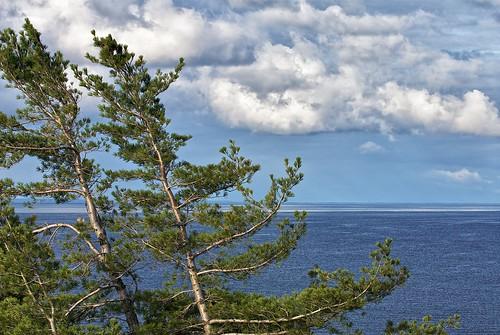 trees sky ontario weather pinetree pine clouds wind horizon cliffs bluffs whitefishbay lakesuperior blown groscap colorefex niksoftware princetownship brilliancewarmth detailextractor