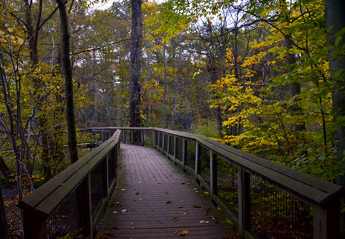 Walkway Into Fall