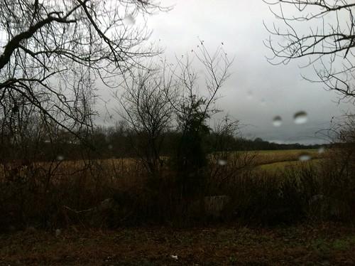 [241/365] Rain, Rain