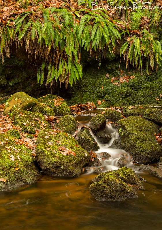 Emerald ferns and golden water lace mossy rocks, padley gorge, peak district, landscape photography Billy clapham