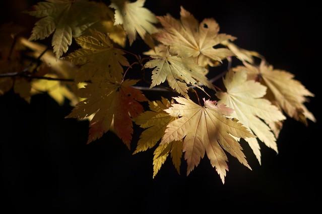 Autumn on Black