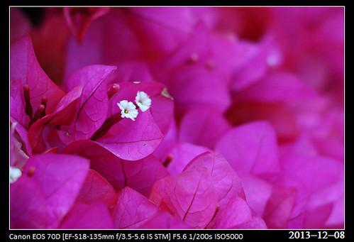 20131208_Flower2