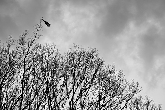 20131223_02_Lonely Kite