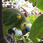 Parrot says hello