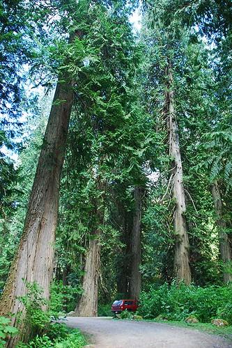 Sumallo Grove, Manning Provincial Park, Cascade Mountains, Hope, British Columbia, Canada
