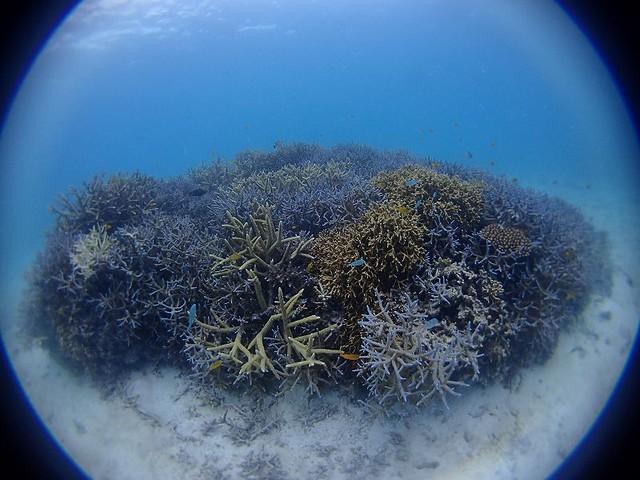 サンゴのある景色