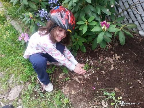 Vada-Planting