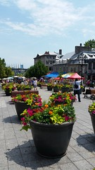 Art Market -  Place Jacques-Cartier