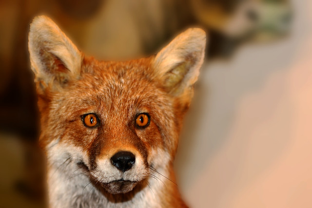 Have you been Foxed ?