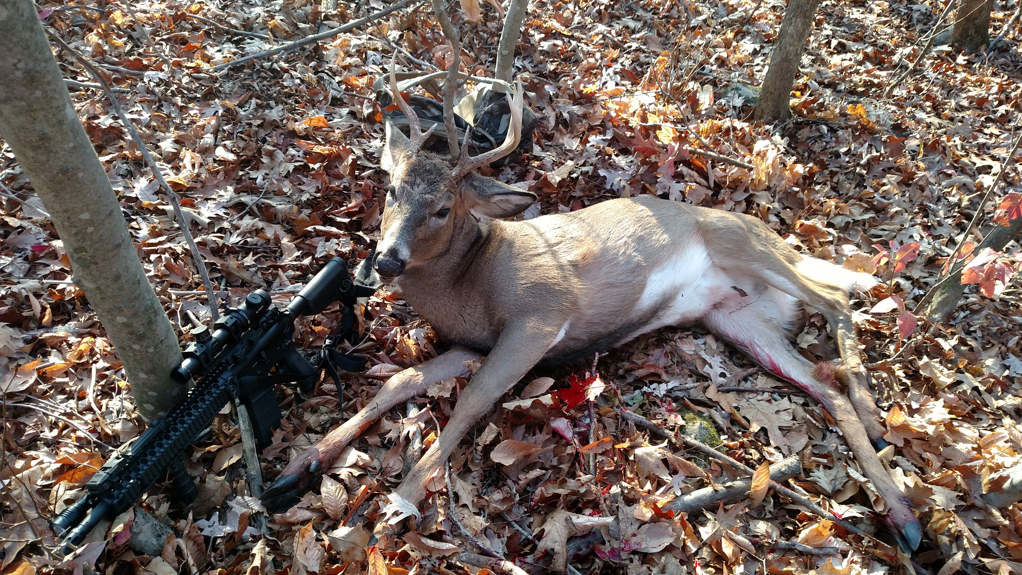 223 whitetail deer hunting round recommendations?? - AR15 COM