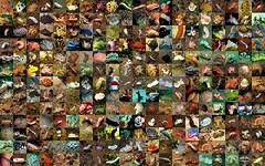 scrap(0.0), bazaar(0.0), city(0.0), waste(0.0), art(1.0), photomontage(1.0),