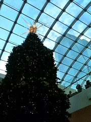 Christmas Tree on TD Square