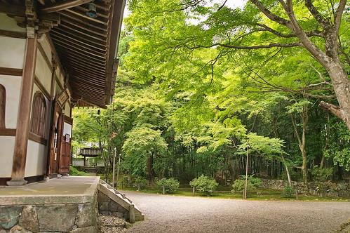 【写真】2013 青葉 : 地蔵院/2021-07-28/IMGP0965