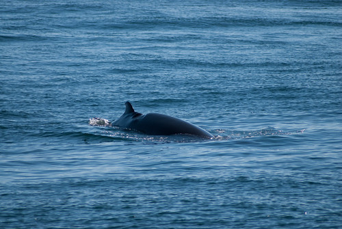 2013-05-24-whale-watch-0173
