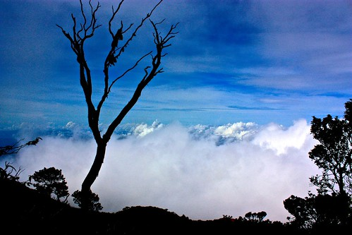 lone tree above the clouds