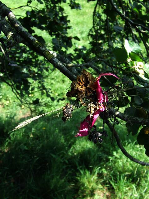 Avebury beeches 7