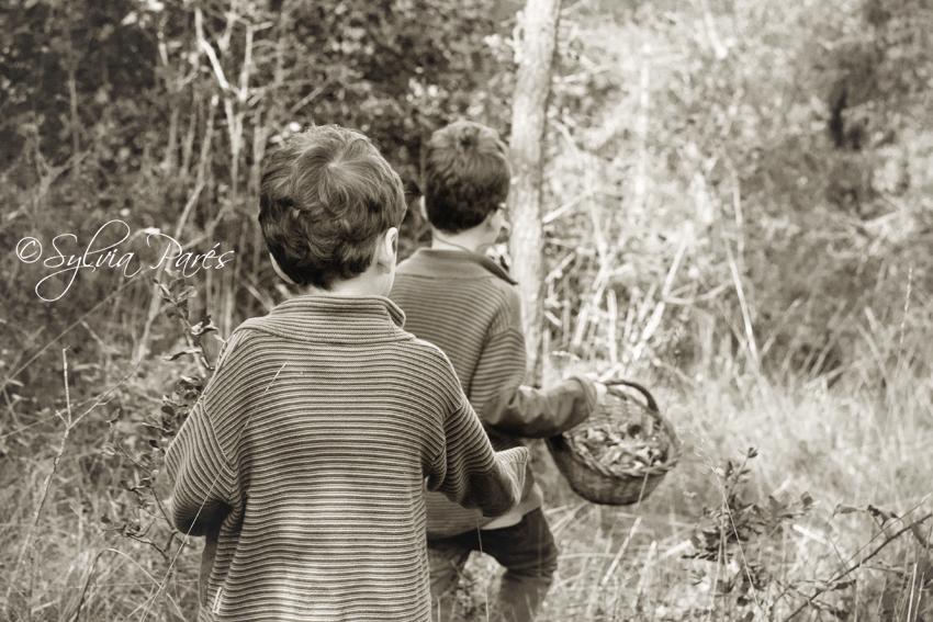 Los gnomos del bosque...