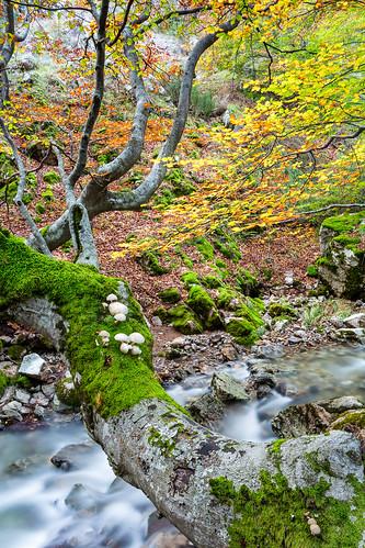 autumn trees sunset españa fall water landscape mushrooms spain agua árboles europa europe paisaje otoño león beech anochecer haya setas castillayleón hayedo ciñera faedo beechforest castileandleón