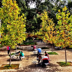 Even though it's 70 degrees in NOLA we still get beautiful fall foliage at Tulane #onlyattulane #tulane #nola