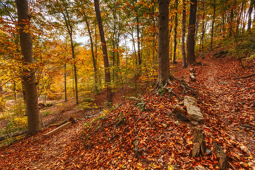 autumn trees fall colors leaves carpet washingtondc trails peaceful hike oasis rockcreekpark inthecity