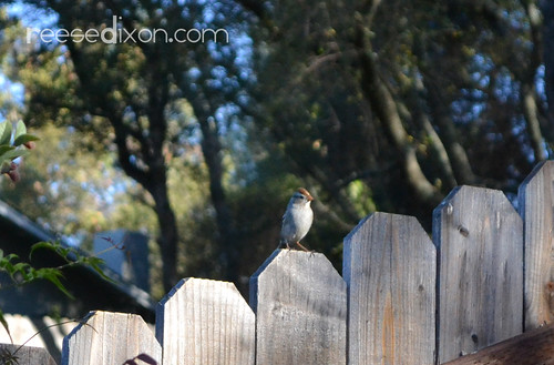 Fence Sitter