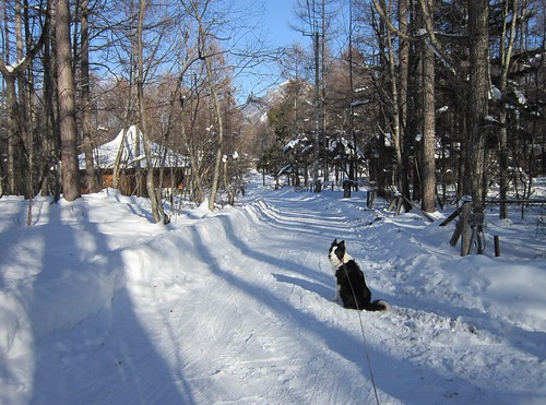 新年の家の前の道路 2014年1月6日 by Poran111