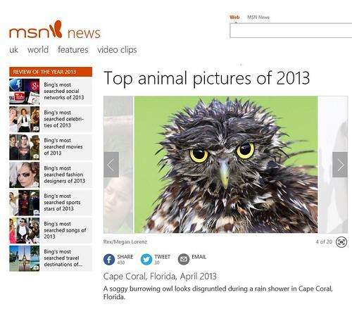 Soggy Owl by Megan Lorenz