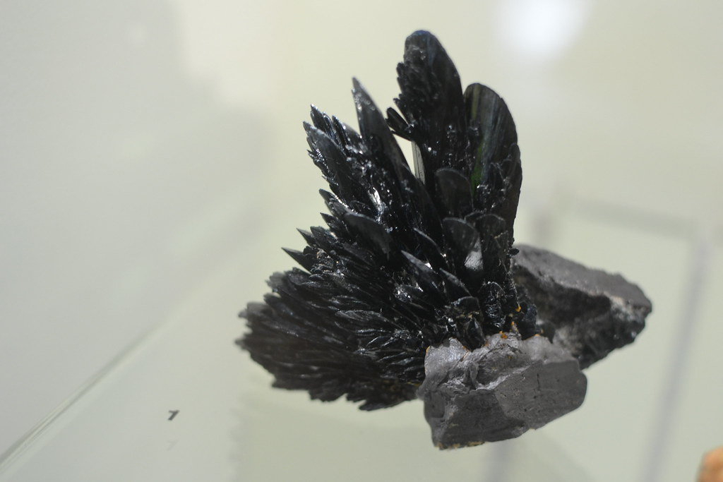 Australian Museum: Winged Stone
