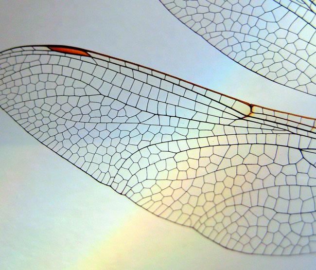 nature-patterns-021