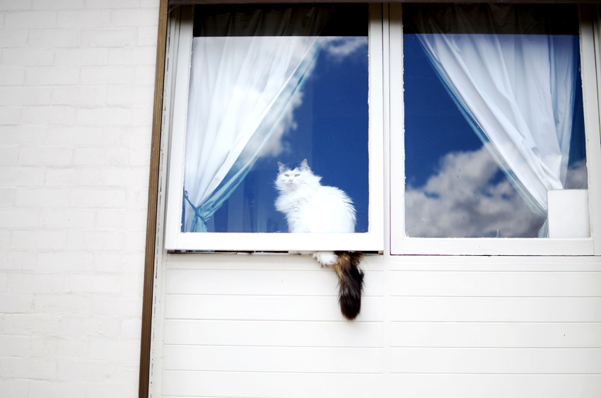 babycat-window