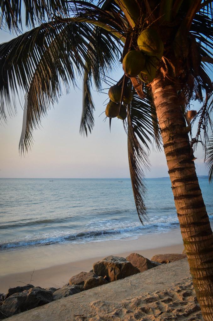 Noix de coco et de palmier