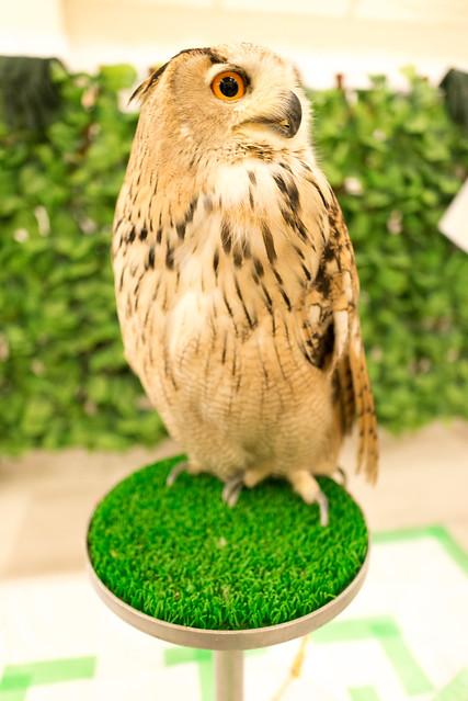 フクロウのみせ シベリアワシミミズク