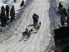 dog, winter, snow, pet, mushing, dog sled, sled dog racing,