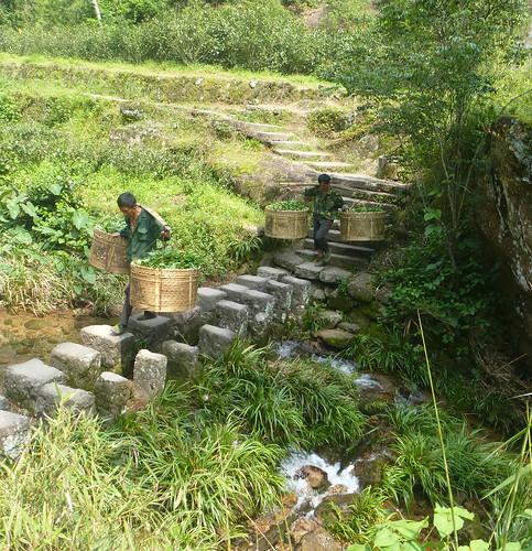 Fujian-Wuyi-Shuillandong-Dahongpao (71)