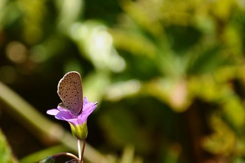 Photos Fleurs De Madagascar