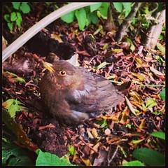 robin(0.0), cardinal(0.0), animal(1.0), branch(1.0), fauna(1.0), blackbird(1.0), bird(1.0), wildlife(1.0),