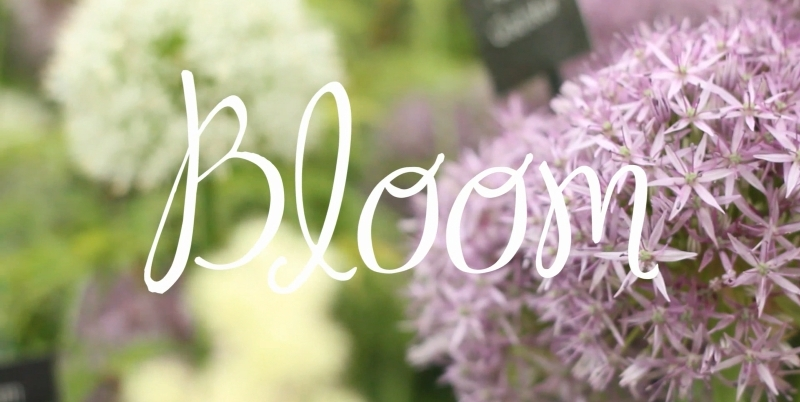 bloom dublin