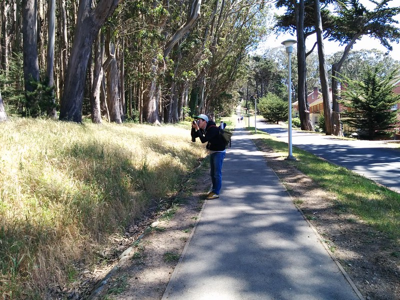 from last sunday in the northside: walk, draw, walk — in the presidio.