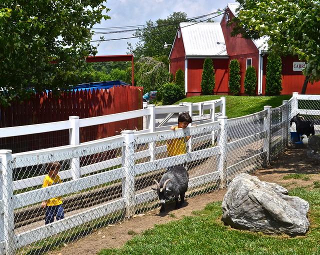 Farm Animals - Hershey Farm Restaurant Lancaster County PA