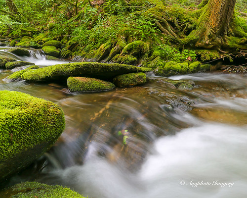 nature water river flow outdoors us moss rocks unitedstates tennessee scenic townsend augphotoimagery